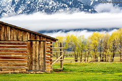 spring at Thomas A. Moulton barn (Cottage Days) Tags: mountains grandtetonnationalpark wyomingbarnspringtrrees