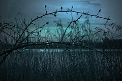 january (EwaHB) Tags: blue lake cold reeds evening silhouettes raindrops legacy aquadrome ewahb