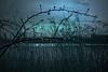 january (EwaHB) Tags: blue lake cold reeds evening silhouettes raindrops legacy aquadrome ewahb