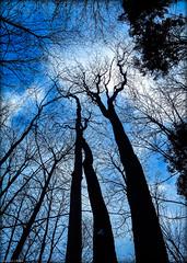 Chercher la lumière (josboyer) Tags: ciel arbre