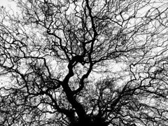 our lives are merely trees of possibilities (2) (Nick_Fisher) Tags: uk bw white black tree blanco arbol negro somerset possibilities nickfisher