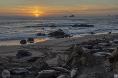 Sunset at the Elephant Seal Rookery (lycheng99) Tags: ocean sunset sky sun color beach nature animals landscape pacific pacificocean sansimeon pacificcoast elephantseal pacificcoasthighway elephantsealrookery 2016sansimeon