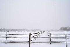 Paddocks (Darren-) Tags: travel sky usa snow ny cold art beautiful beauty america festive landscape fun outdoors island hamptons gorgeous longislandny eastend d5200