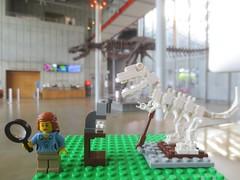 paleotologist w t rex (rikomatic) Tags: california museum stem legos minifigs chemist paleontologist astrophysicist womeninscience