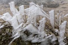 _MG_1019 (schamrock77) Tags: winter italy mountain ice freezing natura inverno montagna friuli ghiaccio galaverna canon6d 35f2is