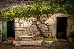 unter dem Weinstock (olipennell) Tags: house museum dorf village vine hr baum kroatien weinstock dalmatien ibenskokninskaupanija primotenburnji jurlinovidvora