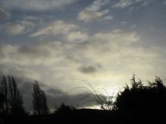 Waiting for more rain IMG_2721 (tomylees) Tags: morning trees winter sky clouds wind february monday essex 8th 2016