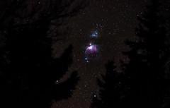 The Orion Nebula (d5photo.com) Tags: trees winter sky snow night stars mark astro nebula astrophotography orion universe constellation manningpark orionnebula equatorialmount markdonovan skywatcherstaradventurer
