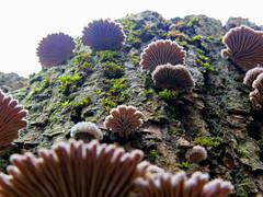 Mush room (Robyn Hooz) Tags: parco punto al d serata wierd vista funghi strano pensili padova pi tutto buona rende cambiare funghetti roncajette