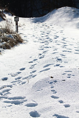 Trail Number 10 (RPahre) Tags: trail snow winter indianadunes indianadunesstatepark indiana footprints robertpahrephotography copyrighted donotusewithoutwrittenpermission
