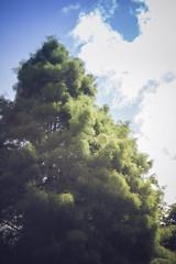Nuevos Ojos (New Eyes) (Dibus y Deabus) Tags: park parque sky espaa naturaleza tree nature clouds canon arbol spain gijn asturias cielo nubes gijon 6d parqueisabellacatolica