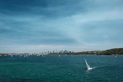sydney sailing