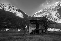 alone (andreavignali93) Tags: como lago casa italia milano lombardia marzo lecco lombardy chiavenna podere sondrio rurale abbandonata gordona piuro