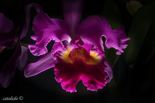 ORCHIDS  _MG_6872  2016-03-04