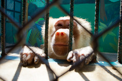59/366_02_28 REPULSION_Monkey in Zoo-1 (Jodi J.M.) Tags: animal mexico monkey places repulsion puertavallarta day59366 366the2016edition 3662016 28feb16