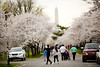 2016 03 26 - 1138 - DC - Cherry Blossoms (thisisbossi) Tags: flowers trees usa streets southwest bicycling washingtondc dc unitedstates pedestrians sakura sw cherryblossoms roads obelisks monuments washingtonmonument bicyclists floweringtrees hainspoint sharedspace