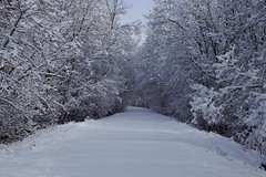 Red Wing Trail (blindpariah) Tags: park trees winter red snow canada wing manitoba trail selkirk
