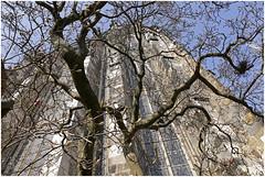 urbane flora 36 (beauty of all things) Tags: dom churches kirchen aachen postcards throughthetrees postkarten urbanes sakrales urbaneflora