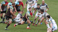 2016_04_02 Quins v Newcastle_19 (andys1616) Tags: newcastle rugby april stoop falcons aviva premiership twickenham quins 2016 harlequins rugbyunion