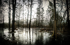 MIKE_289-Swampy (Michael William Thomas) Tags: morning light white mist black cold reflection ice nature water fog photoshop portraits landscape photography frozen photo photographer reflect freeze swamp mikethomas michaelthomas mtphoto michaelwthomas