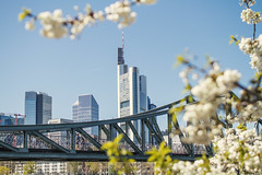 Springtime in Frankfurt (Fenchel & Janisch) Tags: nature germany spring blossom frankfurt sommer frankfurtammain springtime frhling fruehling
