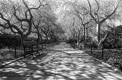 Shadows (vpastro) Tags: trees blackandwhite newyork film nature monochrome vintage path centralpark manhattan wideangle benches nikonfe uppereastside orangefilter kodak400tx nikkor24mmf28ai