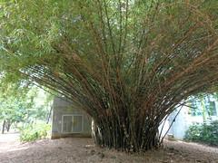 (sftrajan) Tags: colombia botany botanicgarden botanicalgarden medellin medelln jardnbotnico  leapyear  jardnbotnicodemedelln jardnbotnicojoaqunantoniouribe medellinbotanicgarden botanicalgardenofmedelln medellnbotanicgarden