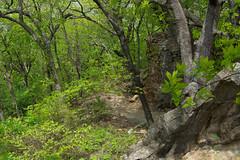 Beautiful Green Foliage (MikeInOwasso) Tags: park plant tree green stone tulsa chandler