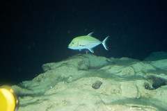 Jack following us (ianc7777) Tags: leica sony submarine stanley karl roatan exploration institue deepsea idabel trielmar a7rii