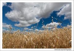 Immerso (Gianluca Longu) Tags: life sardegna sky italy macro clouds canon reflex italia nuvole sardinia natura cielo fiori colori prato 1022 dettaglio naturalmente
