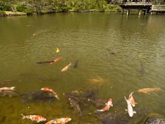 P1590721 (Rambalac) Tags: asia japan lumixgh4 pond water азия япония вода пруд