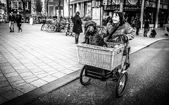 Dog for Sale (DobingDesign) Tags: road street city blackandwhite woman dog pet netherlands smile amsterdam basket trolley teeth wheels transport expressions citylife streetphotography bikes streetlife bicycles streetphoto doggy citystreets cart carrying strolling whickerbasket