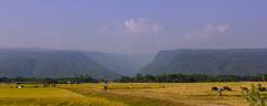 bisoykandi ( ) Tags: clouds landscape sylhet bangladesh