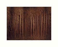 La fort de carton d'Eva Jospin (hlne chantemerle) Tags: panorama art eva louvre arbres installation carton vue sculptures paysages oeuvre fort cour musedulouvre carre expositions jospin vgtaux evajospin