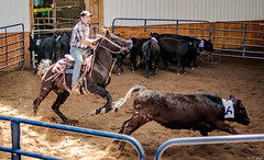 Open Gate Ranch - 2 man ranch sorting - 4-17-2016-36 (Webbed Foot Photo) Tags: horses horse pennsylvania cutting cowhorse webbedfootphotography pentaxk3 darrenolsen dtolsen webbedfootphoto roundrobin2manranchsortingopengateranch