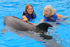 Swimming with Dolphins (greggburch) Tags: cabosanlucas caboadventuresdolphinswim