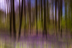 114/366: Bluebell woods abstract pattern (judi may) Tags: trees abstract colour bluebells woods pattern colours patterns norfolk abstraction icm blicklinghall project52 intentionalcameramovement canon7d day114366 366the2016edition 3662016 23apr16