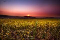 Amman Sunset (MoeenMustafa) Tags: sunset sky color green lights spring amman jordan starburst starsun canon5dmarkiii maenmustafa
