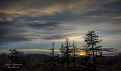 Happy Earth Day (Freshairphotography) Tags: trees sunset sky nature silhouette clouds evening peaceful vancouverisland serene earthday afterglow beautifulbc explorebc explorevancouverisland