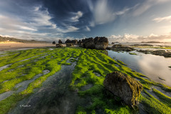 This place was so green! (rainbow wasabi) Tags: ocean seascape seaweed beach nature oregon landscape coast rocks pacific northwest bright lowtide