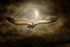 vautour lugubre rapace peur mort charognard halloween chteau (noor.khan.alam) Tags: france halloween mort ciel sombre vol chteau oiseau fantme malheur peur rapace lugubre angoisse vautour hant charognard maldiction