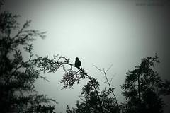 Libre (Noem Arvalo (antes Colore-arte)) Tags: bw naturaleza bird nature monochrome canon monocromo ps bn pjaro virado