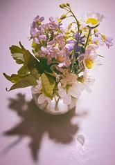 flowers on my kitchen table (Fay2603) Tags: flowers wild flower blossom pflanze pflanzen rosa blumen vase colored blte bunt pastell straus zart wiesenblumen heiter wiesenstrause