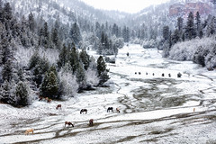 Spring Snow on the Ranch (photosisee) Tags: ranch trees horses snow storm mountains southwest nature weather animals landscape outdoors utah spring 70200 canon5dsr 5dsr