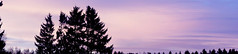 (Virety) Tags: pink trees sky nature landscape purple outdoor gradient