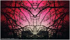 kaleynelsonsym13_1 (kaleynelson) Tags: trees abstract tree nature landscape meditate symmetry mirrored symmetric symmetrical meditation psychedelic spiritual chakra chakras alexgrey sacredgeometry kaleynelson