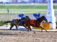 "2015-12-19 (7) r4 Trevor McCarthy on #7 Regal Soldier (JLeeFleenor) Tags: photos photography md marylandracing laurelpark marylandhorseracing jockey جُوكِي ""赛马骑师"" jinete ""競馬騎手"" dżokej jocheu คนขี่ม้าแข่ง jóquei žokej kilparatsastaja rennreiter fantino ""경마 기수"" жокей jokey người horses thoroughbreds equine equestrian cheval cavalo cavallo cavall caballo pferd paard perd hevonen hest hestur cal kon konj beygir capall ceffyl cuddy yarraman faras alogo soos kuda uma pfeerd koin حصان кон 马 häst άλογο סוס घोड़ा 馬 koń лошадь winner maryland"