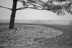 XT1-01-19-15-433-2 (a.cadore) Tags: nyc newyorkcity blackandwhite bw zeiss landscape centralpark uptown fujifilm metropolitanmuseum metmuseum carlzeiss themetropolitanmuseumofart xt1 zeissbiogon35mmf2 biogont235 fujifilmxt1