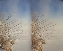 The 3D twigs beside the Bow river, Calgary. (JOHN . T) Tags: stereoscopic 3d d stereo3d stereoviews 3dphotos 3dcontent poppy3d wpoppy3