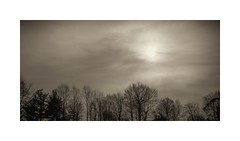 Almost Sun (sorrellbruce) Tags: morning trees winter sky bw monochrome weather silhouette blackwhite soft fuji cloudy january peaceful negativespace simplicity undulation delicate simple toning lr6 softclouds photoninja framefun silverefexpro fujinon23mm fujixt1 thomasfitzgeraldpresets